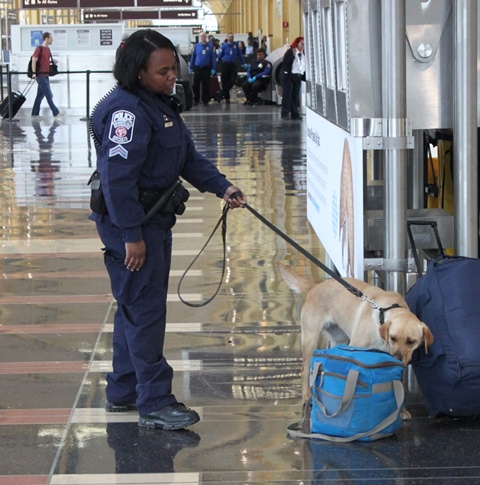 Corporal Ebony Smith and her K-9 partner Honey search an unattended luggage at Reagan National Airport.